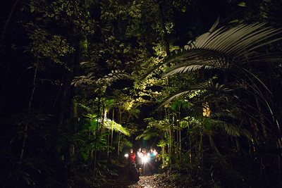 Night Walk - Cape Tribulation