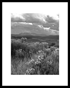 Mystery Meadow