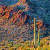 Saguaro  Sunset | Gates Pass