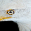 """January 9, 2010 - Pocomoke River State Park<br /> <br /> Twice per year, PRSP offers a guided tour of the Milburn Landing area which is closed in the winter. The area is a congregation point for bald eagles. This event is called """"Eagle Watch""""."""