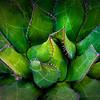 Thorny Succulent | Cabrillo NM
