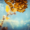 Piece of Kelp, underwater photography