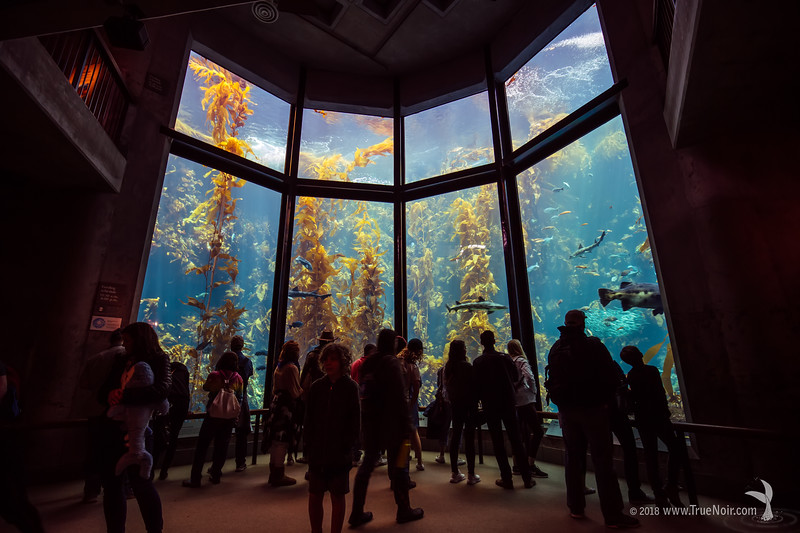 Standing at the Kelp forest, Monterey Bay Aquarium
