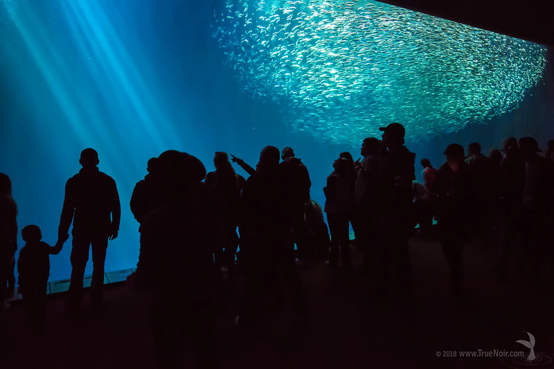Open sea exhibit, Monterey Bay Aquarium
