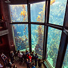Kelp forest at the Monterey Bay Aquarium, view from above