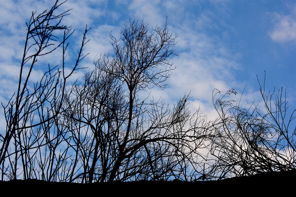 Cloudy Twigs