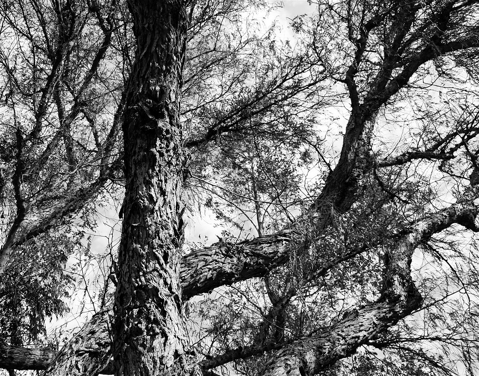 Abstract Branches (Simulated Pen & Ink)