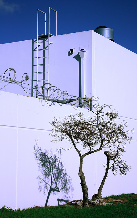Prison Break: Two trees escape maximum security facility... News at 11.