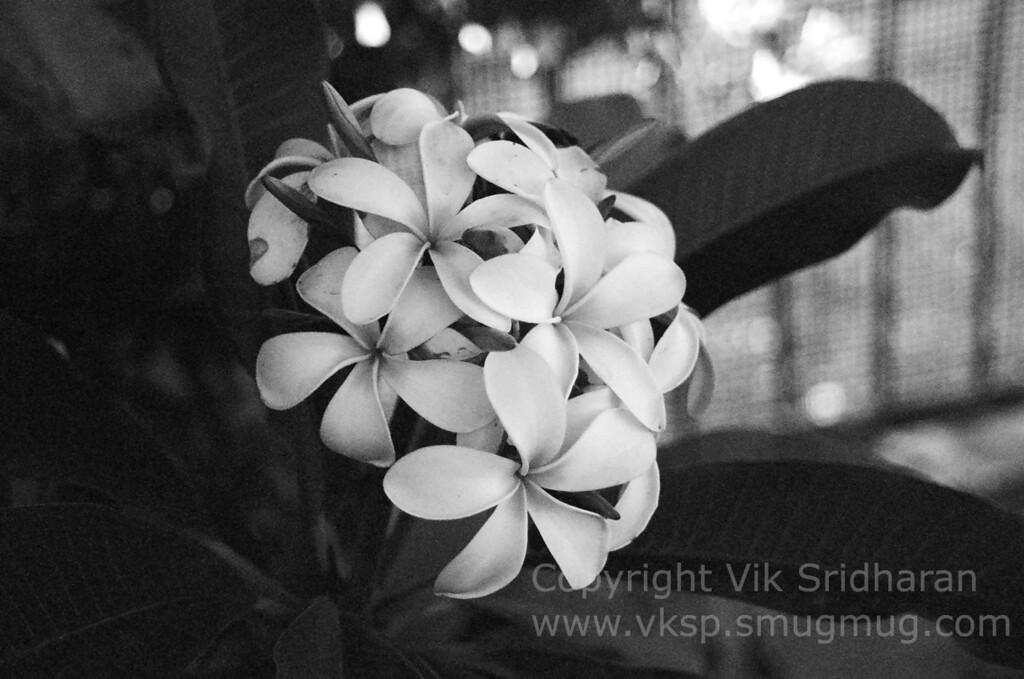 http://www.vksphoto.com/Photography/Explorations-in-Film/i-w8fJtXL/0/XL/44940016-XL.jpg