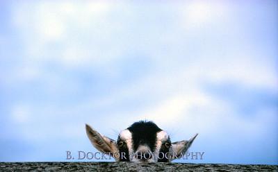 (C) B. Docktor 2007