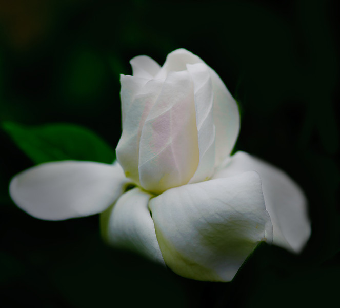 A white flower in soft focus.
