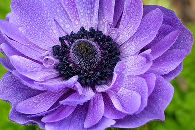 PURPLE-BLUE FLOWER