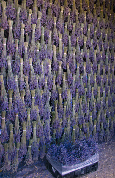 Wall of Lavendar