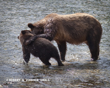 BEAR LESSONS - LISTEN TO YOUR MAMA