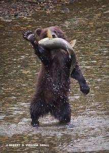 HIGH FIVE!  QUITE A CATCH FOR A SPRING CUB.