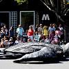Turtle at Annual Fairfax Parade in California