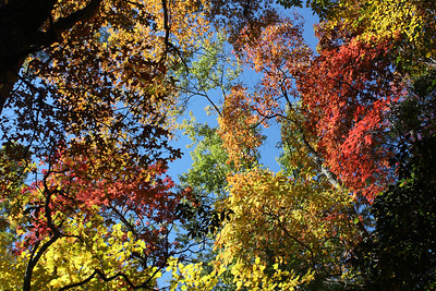 Color in Linville Gorge