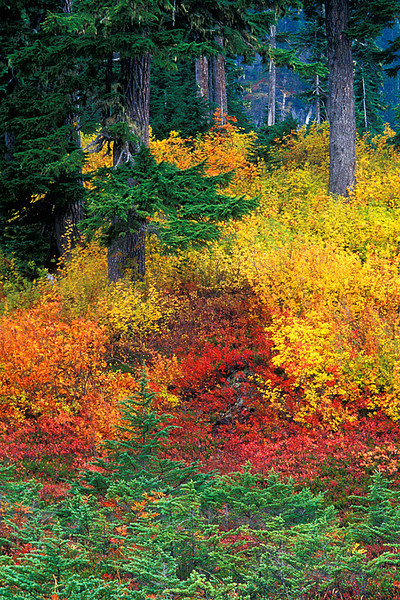 #109 Fall Colors, Mt. Baker-Snoqualmie Natl. Forest, WA