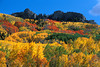 #176 Colorado Autumn 1