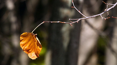 Fall foliage Bruce