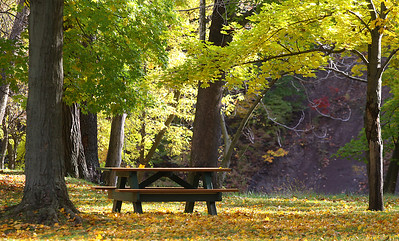 20oct09 bishop--- fall color A picnic table in the east end of Cascade Park.