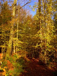 Middle Saranac Lake trail, oct 15, 2012 CIMG7674