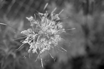 Sunflower-450