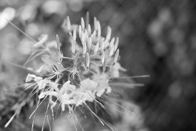 Sunflower-452