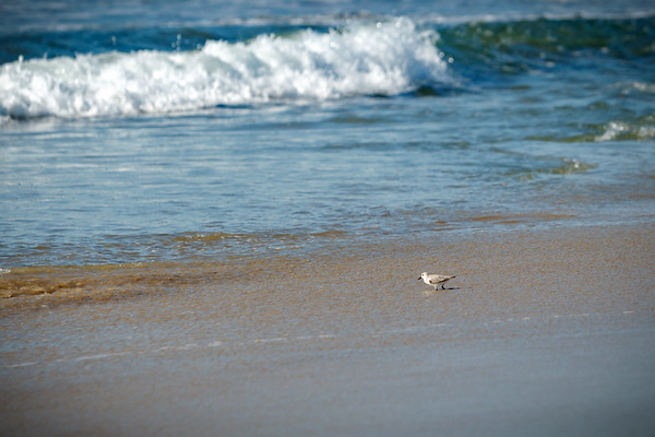 A bird wades in the water