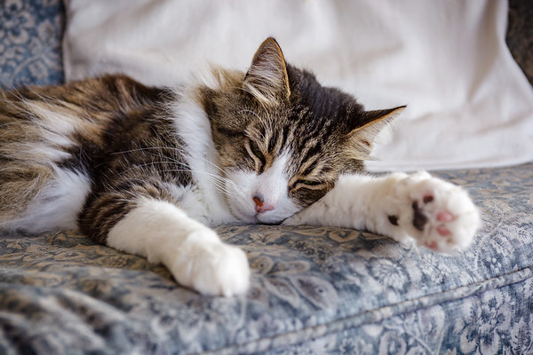 Lazy Sunday by Cisco #IndependenceDay2021