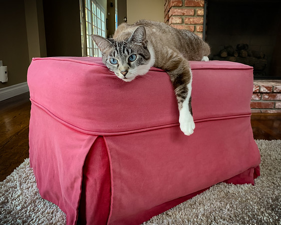 Lazy Sunday on a long weekend (Photo by #CatMom) #StayLazyMyFurriends #SoLazyCantMove #NothingToBeDone #MemorialDayWeekend2021 #SiameseSunday #siamesecatsofinstagram #catsofinstagram