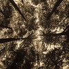 Seattle Tree Tops