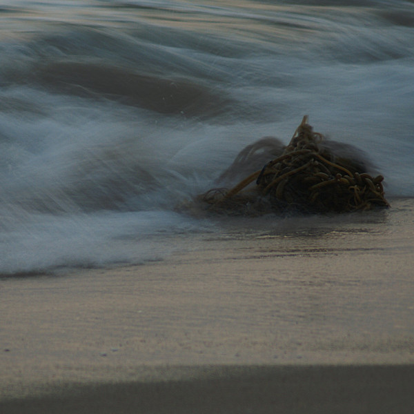 "This stationary kelp pounded by waves was considered for the ""Go With the Flow"" contest."