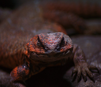 "For the ""Reptilian Overlords"" contest I went with a different shot of this guy, but I like this one too."