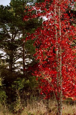 Farktography - Trees 2010