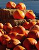 Pumpkins on display - my favorite