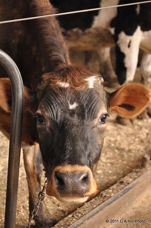 2011 Farms in Dartmouth