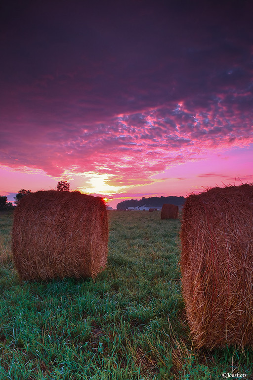 Bales stand still as the sun's first rays break through a sheen of low lying clouds. Hudsonville, MI