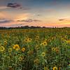 Fenville, Allegan County MI, 2016