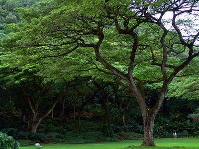 Waimea Valley, Haleiwa, Hawaii