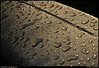 "16Jun09  water droplets in early morning light.  <a href=""http://carpelumen.smugmug.com/gallery/5074429_hmVzR/2/314779600_ySh7r/Medium"">one year ago.</a>  f/8, 1/320s, iso 200."