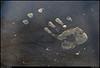 "25Mar11  handprint in pollen - unsigned artwork.  <a href=""http://carpelumen.smugmug.com/Photography/2010/March10/11394055_8VU6F/1/820879225_f8eHw/Medium"">one year ago.</a>  f/8, 1/250s, iso 400."