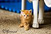kitty_20080905_6703