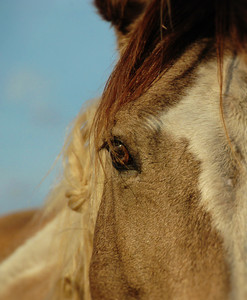 Sixteen Hands Horse Santuary