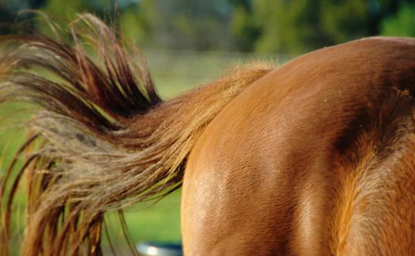 Sixteen Hands Horse Sanctuary