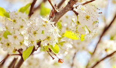 Spring in Virginia