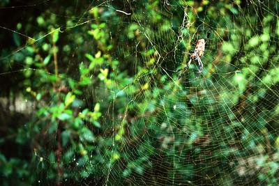 Sholom Park Ocala Florida