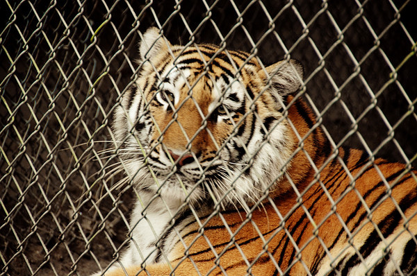Lions, Tigers and Bears Refuge