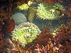Some critters in tthe tide pools at Yaquina Head, Newport, Oregon.