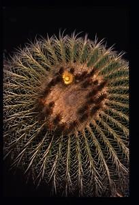 20 Cactus (Lotusland 2004) 96
